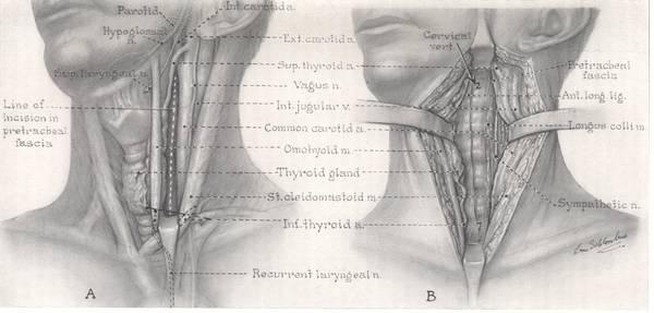 Halswirbelsäule (HWS)